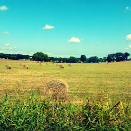 Hay Bale Circles by Jessica Rose - Landscapes Prairies, Meadows & Fields ( circlebales, hay, country, field, haybales, circles, lifestyle,  )