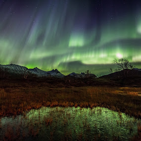 Aurora and mountains by Benny Høynes - Landscapes Prairies, Meadows & Fields ( green, northern lights, aurora borealis, pond, norway,  )