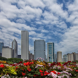 Цветен поздрав от Чикаго by Nadejda Daneva - City,  Street & Park  City Parks ( град, парк, поздрав, сгради, цвят, чикаго сащ )