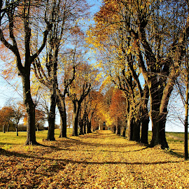 by Dagmar Germaničová - Landscapes Travel ( autumn, trees )
