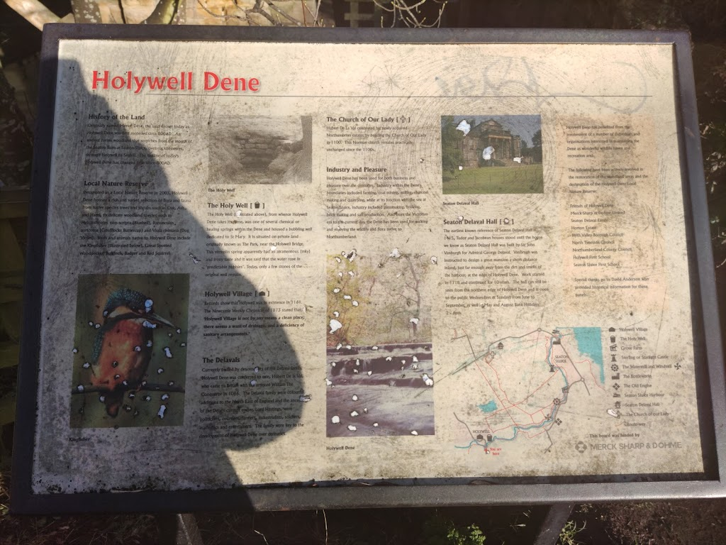 Holy­well Dene History of the Land Originally named Merkel Dene, the land known today as Holy­well Dene was first recorded circa 800 AD. An ancient ravine woodland that stretches from the mouth of ...
