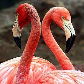.:: My Heart ::. by Rakhman Matsunaga Stavolt - Novices Only Wildlife