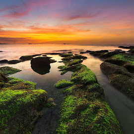 Toward Horizon by Christianto Mogolid - Landscapes Caves & Formations ( blue hour, rocky, sunset, background, moss, line )