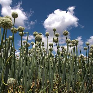 weird plants.jpg
