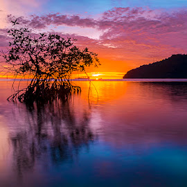 Mangrove in action by M Fadhli Farisi - Landscapes Sunsets & Sunrises ( nature, sunsets, beach, landscape )