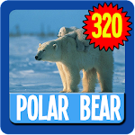 Polar Bear Wallpaper HD APK Image