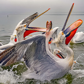 Feasting Time by Ioannis Alexander - Animals Birds
