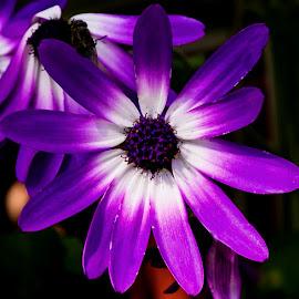 by Luz UK - Flowers Flower Gardens (  )