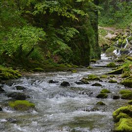 Yellow river! by Gugut Razvan - Nature Up Close Water ( water, flora, fauna, cascade, river )