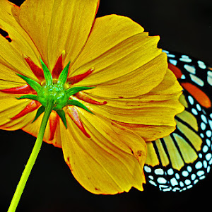 core bck w monarch show x.jpg