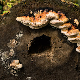 by Autumn Orlicki - Nature Up Close Mushrooms & Fungi