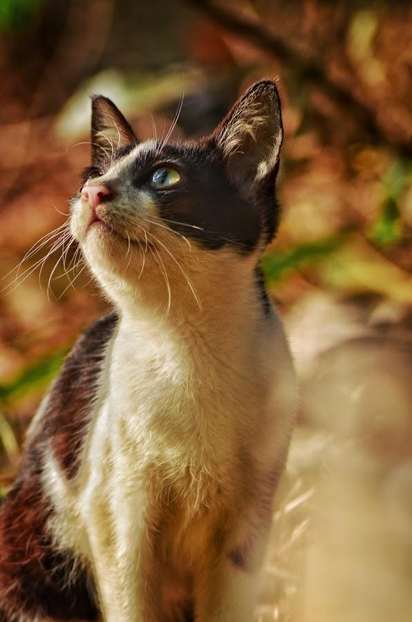 by Albin Akkara - Animals - Cats Portraits