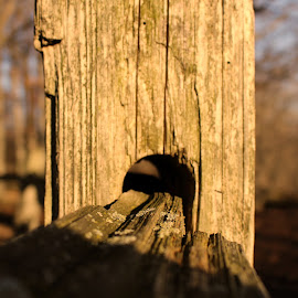 Don't Fence Me In by Doug Milligan - Abstract Macro ( fence, trees, fence post, sun )