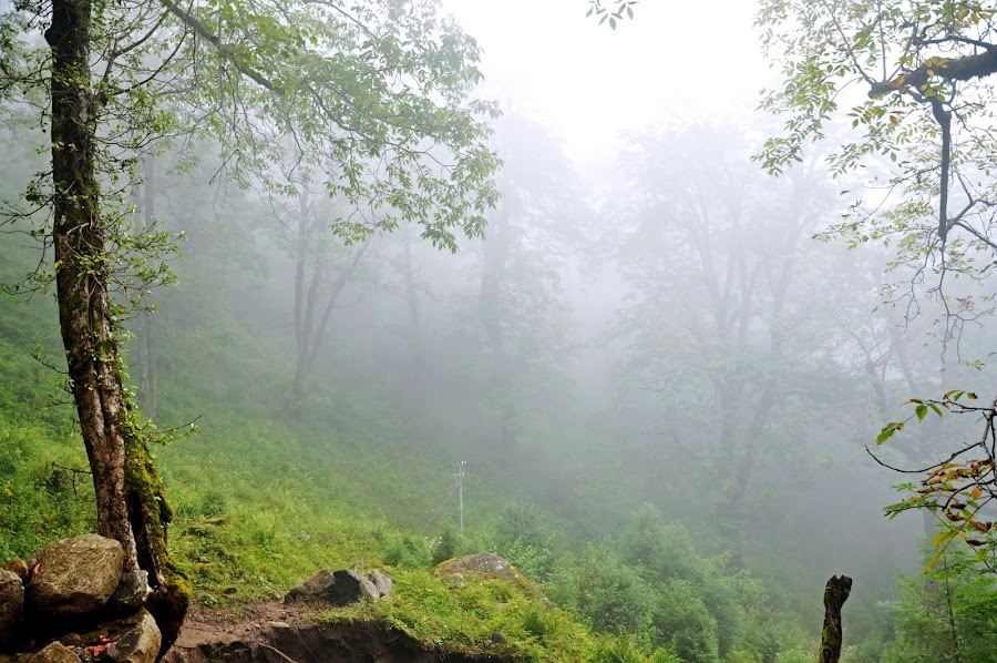a place so mysterious... by DIPANKAR HALDER - Landscapes Travel ( auli, fog, d90, cloud, nikon, place )