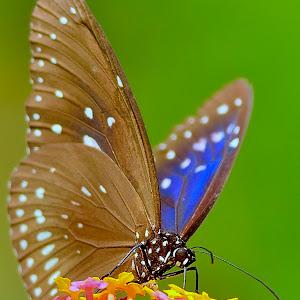 Oct 21 butterfly on flowers.jpg