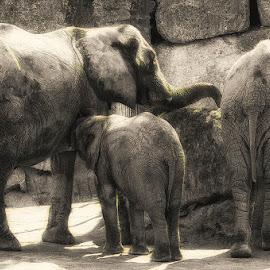 Elephants at a watering hole by Mirko Ilić - Animals Other ( elephants, family, watering hole )