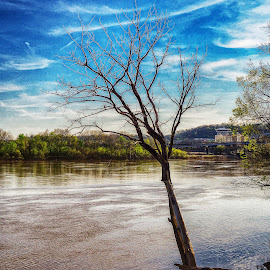 Flooded Tree by Richard Michael Lingo - Artistic Objects Other Objects ( ohio, tree, flood, ohio river, cincinnati, artistic objects )