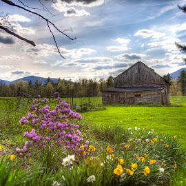 Spring Farm by Stephen Goodhue - Landscapes Prairies, Meadows & Fields ( clouds, field, fence, barn, purple flowers, golden flowers, vermont, sunderland,  )
