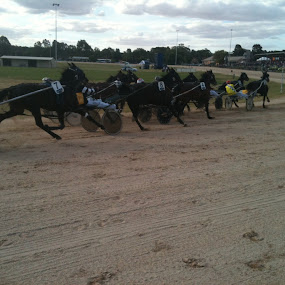 Harness Racing returns to Wedderburn by Tay Pratt - Animals Horses ( re-opening, wedderburn, australia, harness racing, champions )