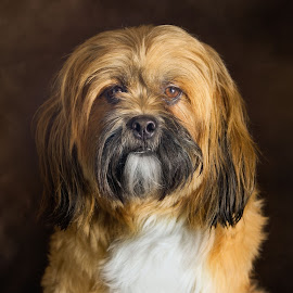 by Jamie Keith - Animals - Dogs Portraits