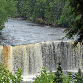 Tahquamenon falls by Dipali S - Nature Up Close Water ( seasonal, waterfall, lakes, state, tahquamenon, beauty, travel, flow, landscape, usa, pretty, upper, nature, fresh, foliage, pine, water, peaceful, park, colors, beautiful, tourism, forest, scenic, michigan, wilderness, national park, season, tannin, outdoor, falls, trees, natural, peninsula, river )