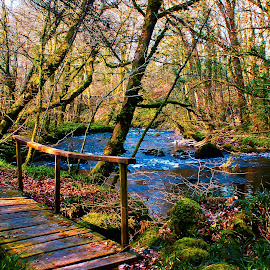 Old wooden bridge by John Wilson - Landscapes Forests ( relax, tranquil, relaxing, tranquility,  )