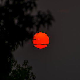 Smoky Sun by Matt Lutjen - Novices Only Landscapes ( portland, columbia gorge, eagle creek fire, wildfires, smoky, sun )