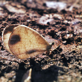 Psyche by AB Mehmud - Novices Only Macro ( close up, sunrays, nature, butterfly, novices only,  )