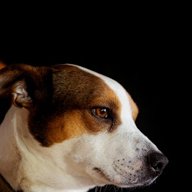 content by Lynne Brewer - Animals - Dogs Portraits ( reflection, cute, dog, light, regal )