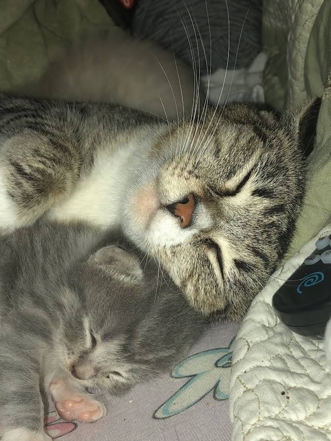 love by Marie Carpenter Perry - Animals - Cats Kittens