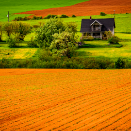 by Joseph Law - Landscapes Prairies, Meadows & Fields