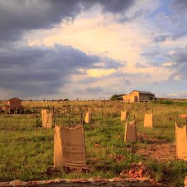 New Orchard by Susan Pretorius - Landscapes Prairies, Meadows & Fields (  )