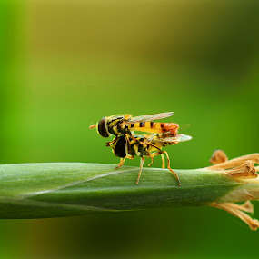 ML  by Basuki Kristanto - Novices Only Macro