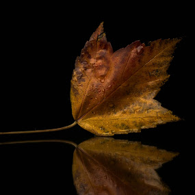 FallShine by Bob White - Nature Up Close Leaves & Grasses ( studio, mirror, red, softbox, fall, brown, leaf,  )