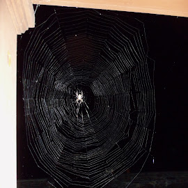 Spider Orb Web by Terry Bernardo - Nature Up Close Webs ( spiders, orb, spiderweb, orb web, spider,  )