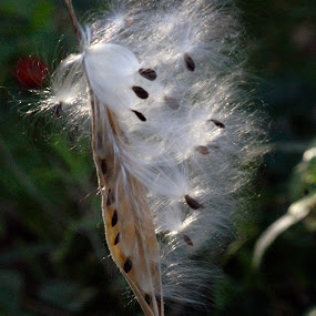 Blowin In The Wind by Howard Mattix - Artistic Objects Other Objects ( nature, mikk weed, seeds, weeds, windy day,  )