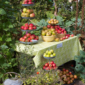 Apple Still Life by Joe Proctor - Nature Up Close Gardens & Produce ( watering can, london, autumn, still life, apples garden still life table, fall, apples, harvest, table, pwcfallleaves-dq, garden )