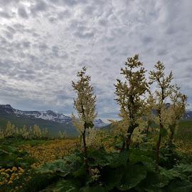 by Bergljót Guðmundsdóttir - Landscapes Mountains & Hills