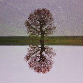 Serendipity by Alina M. - Landscapes Prairies, Meadows & Fields ( field, tree, serene, pink, surreal )