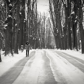 Walking in the snow by Natalia Dobrescu - City,  Street & Park  City Parks ( citypark, park, black and white, canon70d, street, romania, street scene, walking in the snow, snowing, city, street photography, blackandwhite, bucharest, snow )