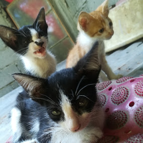 Poor man's cats by Adoracion Bautista - Uncategorized All Uncategorized ( cats, no breed, meow, yellow, feline, black,  )