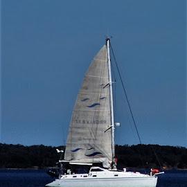 Catamaran by Sarah Harding - Novices Only Sports ( sailing, novices only, sport, recreation, boat )