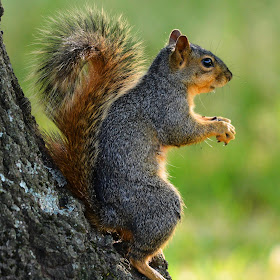 Squirrel 041416AA.jpg