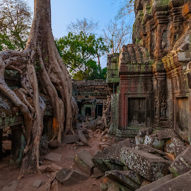 Ta Prohm - Temple by René Ehrhardt - Buildings & Architecture Decaying & Abandoned ( structure, tomb raider, ta prohm, stone, architecture, khmer, temple, religion, ancient, religious, culture, decay, abandoned )