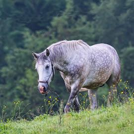Walk by Stane Gortnar - Animals Horses
