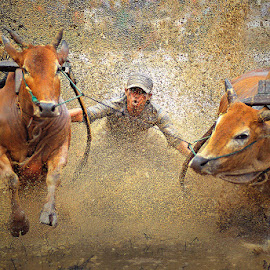 Buffalos Racing by Willy Brordus - Sports & Fitness Other Sports ( racing, buffalos )