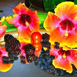 { Southern Fruits & Berrys }  by Jeffrey Lee - Food & Drink Fruits & Vegetables ( hibiscus, dew berrys, berrys, mull berrys, black berrys,  )