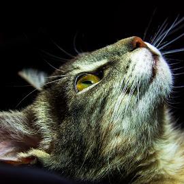 by Edgard Enrique Quezada - Animals - Cats Portraits