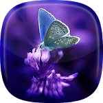 Butterflies Live Wallpaper ? Moving Butterfly Icon