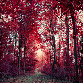 Red forest by Paolo Testa - City,  Street & Park  City Parks ( red, tree, park, nature, shadow, dutch, forest, light, sun, colours, city )